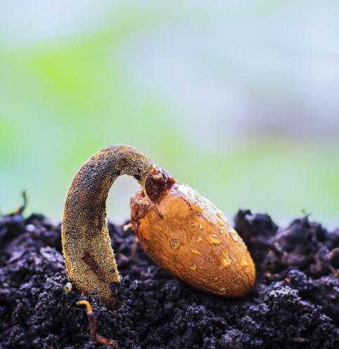 Seed Growing
